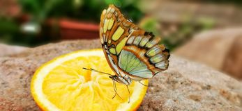 Butterfly yellow. Orange, delicate, natural, beautiful stock photos