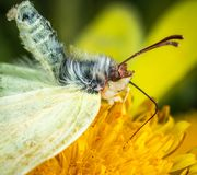 Butterfly on Yellow Petaled Flower royalty free stock photos