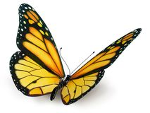 Butterfly. Yellow butterfly on white background isolated Stock Photos