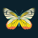Butterfly yellow wing abstract on navy background Royalty Free Stock Photos