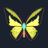 Butterfly yellow  wing abstract on navy background Royalty Free Stock Photo