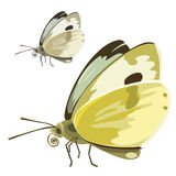 Butterfly with yellow wings. Vector insect Royalty Free Stock Photos