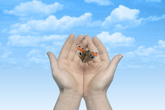 The Butterfly in your hands Royalty Free Stock Photos