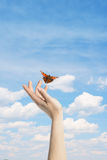 The Butterfly in your hands Stock Photo
