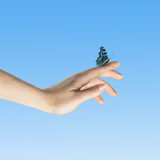 The Butterfly in your hands Royalty Free Stock Photo