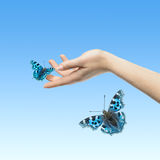 The Butterfly in your hands Stock Photos