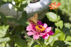 Butterfly (Argynnis paphia) Stock Photography