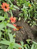 Butterfly at the zoo. Minnesota, animal, monarch royalty free stock photos