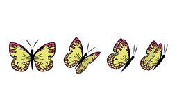 butterfly6 Стоковое Фото