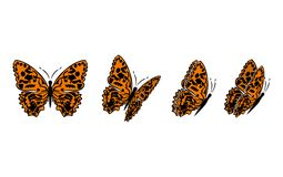 Butterfly7 Image stock