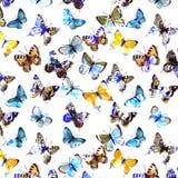 Butterflyes акварели на белой предпосылке es Стоковые Изображения RF