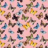 Butterflyes акварели на белой предпосылке es Стоковое Фото