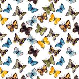 Butterflyes акварели на белой предпосылке es Стоковое Изображение