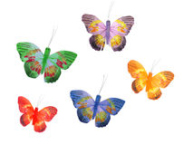 Butterflyes Stock Images