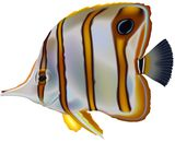 Butterflyfish Stock Photo