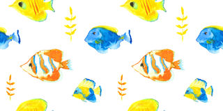 Butterflyfishes Stock Image