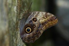 butterflyon drzewo Obraz Stock