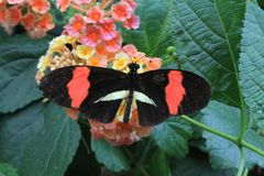 Butterfly. On flower in summer Stock Photography