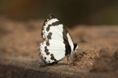 Butterflys в Таиланде Стоковые Изображения