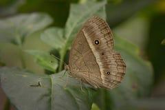 Butterflys в Таиланде Стоковые Фотографии RF