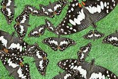 Butterflys на траве Стоковые Фото