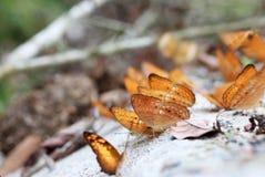 butterflys цветастые Стоковое Изображение RF