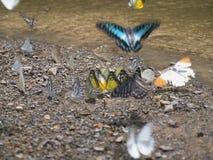 Butterflys fotografía de archivo