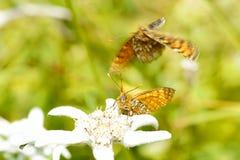 butterflys 库存图片
