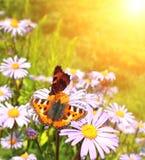 butterflys Стоковые Фото