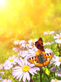 Butterflys Royalty Free Stock Images