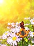 butterflys Стоковые Изображения RF