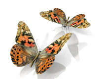 The butterflys Royalty Free Stock Photography