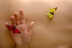 butterflys 免版税图库摄影