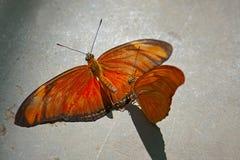 Butterflys Стоковое Изображение
