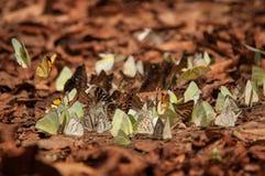 Butterflys Fotografia Stock
