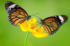 Butterflys Стоковые Изображения