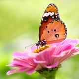 Butterflys Стоковое фото RF