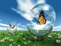Butterflys and bubbles. Butterfly  in a bubble in the meadow Stock Photos