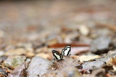 Butterflys coloridos Imagen de archivo