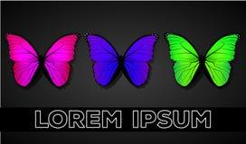 Butterflys em um fundo escuro Imagens de Stock