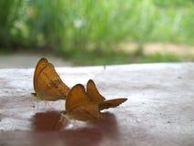 Butterflys stock photos
