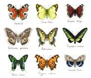Butterflys Imitação da aquarela Imagens de Stock Royalty Free
