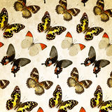 Butterflys Stock Images