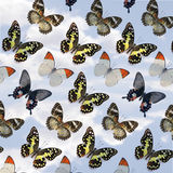 Butterflys Royalty Free Stock Photo
