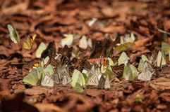 Butterflys Stock Photography