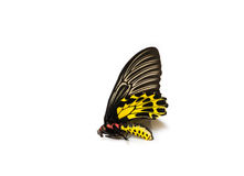 Butterflys staff. Royalty Free Stock Images