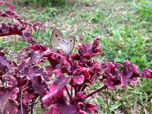 Butterflys stupefacenti fotografie stock libere da diritti
