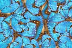 Butterflys tropicali del fondo astratto Immagine Stock