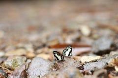 Butterflys variopinti Immagine Stock