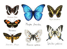 Butterflys. Watercolor imitation. Royalty Free Stock Image
